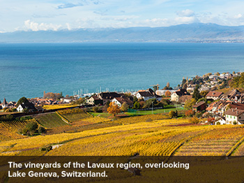 The Lavaux Region
